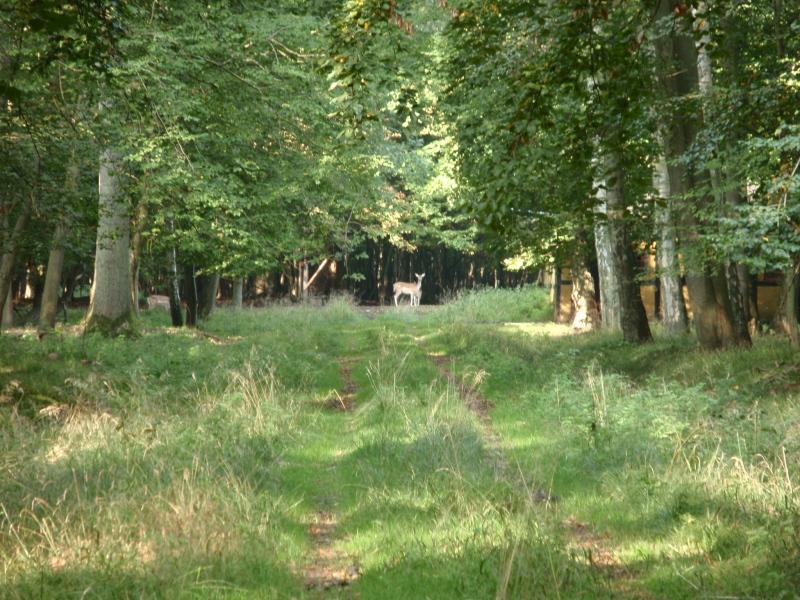 Dybt inde i Roden Skov